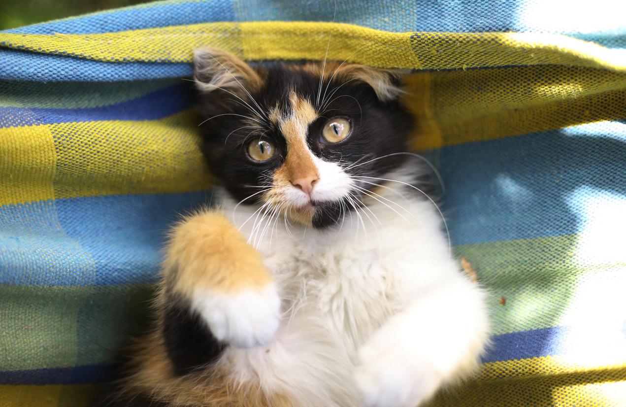 colorful kitten in hammock
